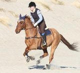 EQUINE FUSION ALL TERRAIN_