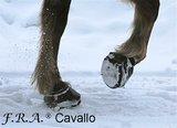 CAVALLO STUDS MET SLEUTEL _