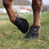 EQUINE FUSION RECOVERY_