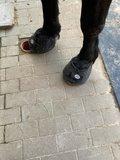 CAVALLO BIG FOOT_